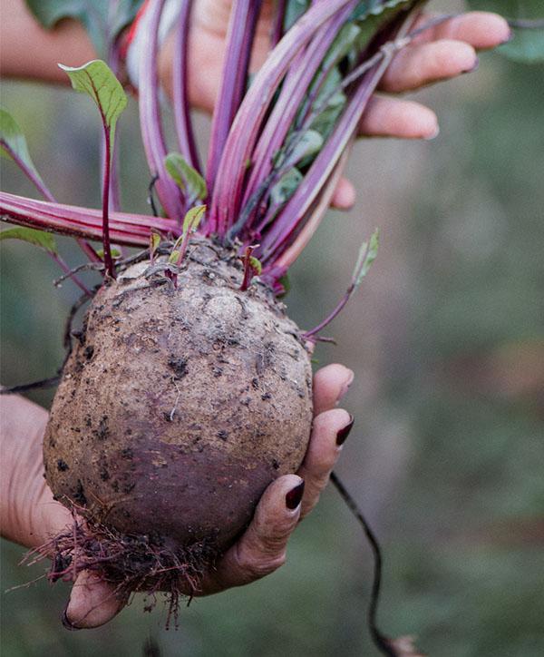 Home - Dakota Fresh Food Hub